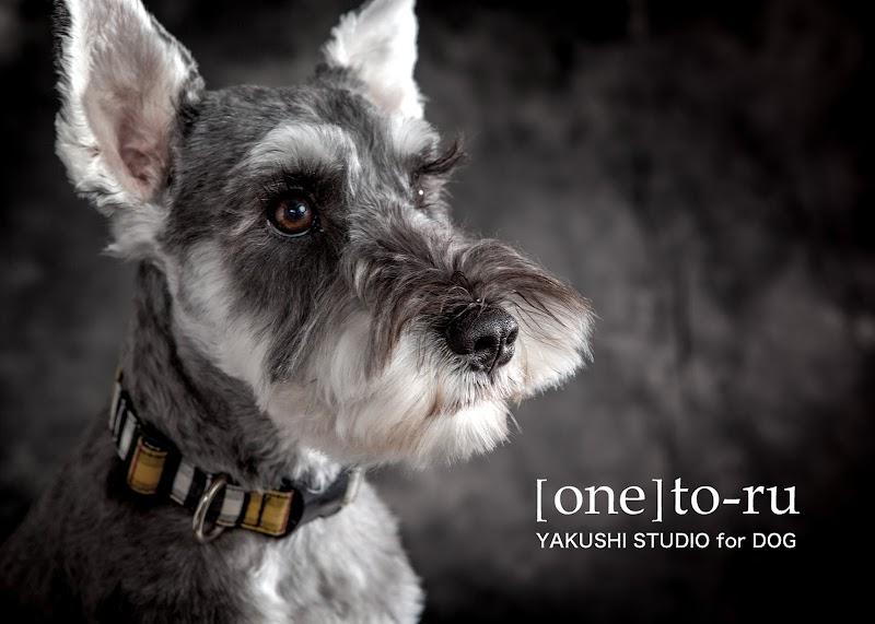 犬専門の写真館 YAKUSHI STUDIO for DOG 東京