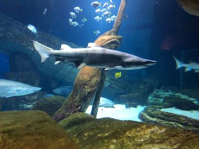 Aquarium Long Island Aquarium
