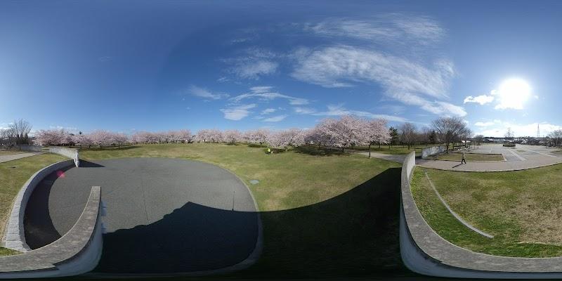 新井田公園