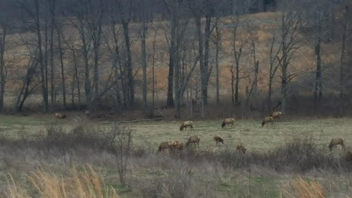 Nature Preserve «Elk and Bison Prairie», reviews and photos, Elk & Bison Prairie Rd, Golden Pond, KY 42211, USA