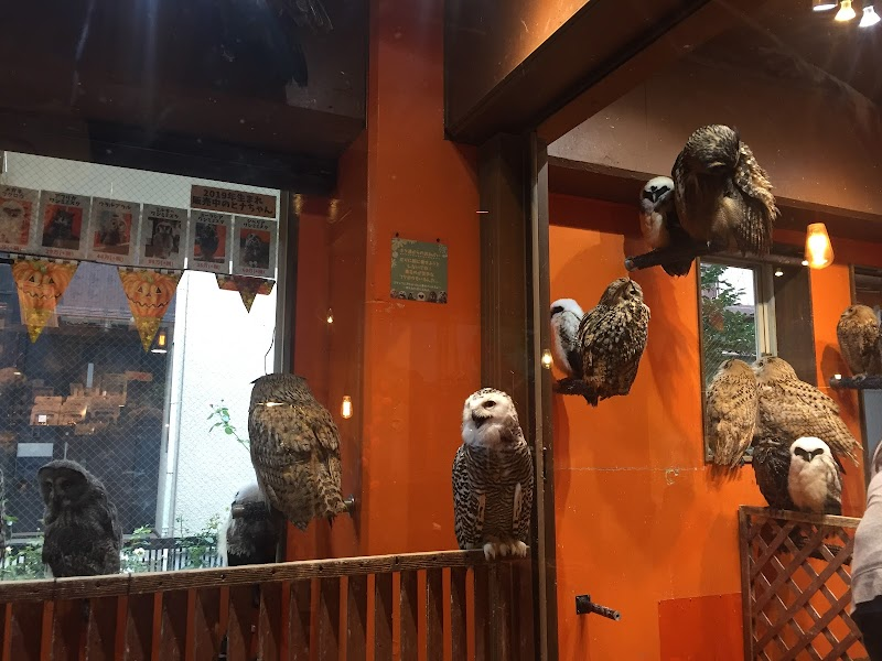 Owl & Hedgehog Cafe