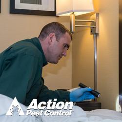 Pest Control Service «Action Pest Control», reviews and photos