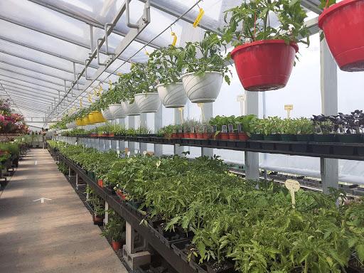 Jardinerie Centre Horticole du Témiscouata Inc à Témiscouata-sur-le-Lac (QC) | LiveWay