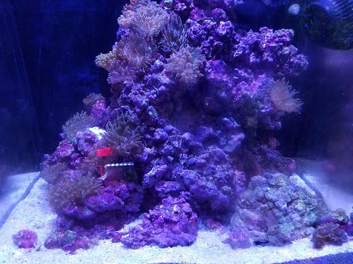 Tropical Fish Store «Elegant Reef - Tropical Fish Studio», reviews and photos, 301 W Nakoma Dr, San Antonio, TX 78216, USA