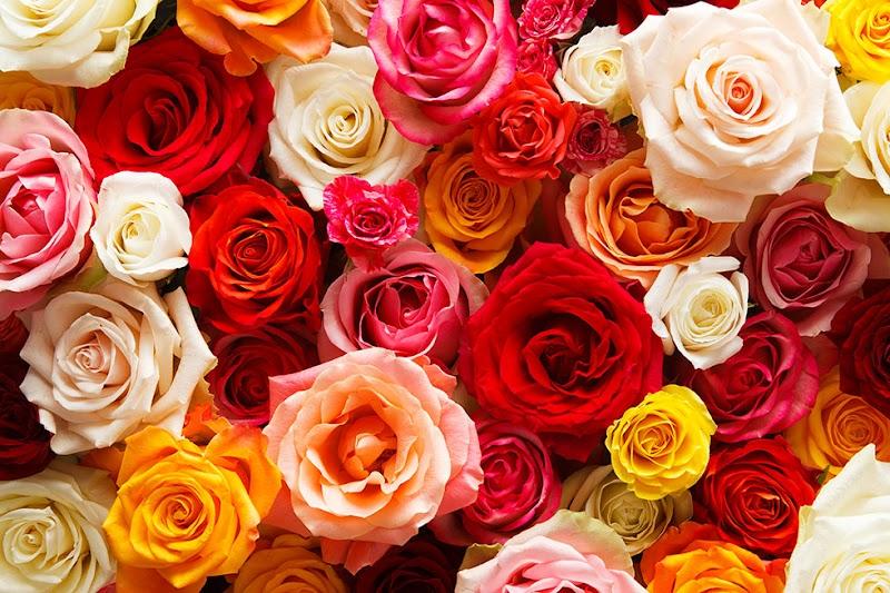 AFRIKA ROSE & FLOWERS六本木ヒルズ店