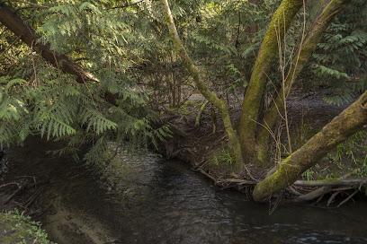 Thornton Creek Trail