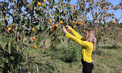 Harvest Season Farm (previously Matt Family Orchard)