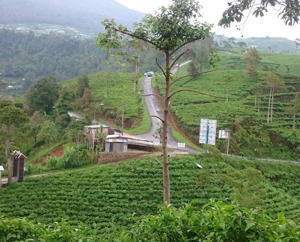 Kebun Teh Kemuning, Karanganyar Jateng. Lokasi yang ideal untuk berlibur dengan suasana sejuk dan tenang.