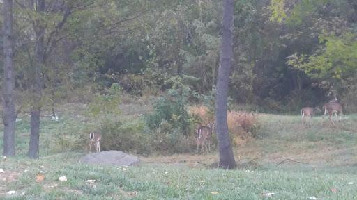 Golf Club «Musket Ridge Golf Club», reviews and photos, 3555 Brethren Church Rd, Myersville, MD 21773, USA