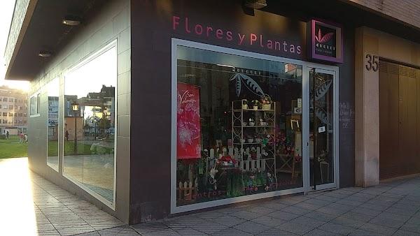 Bouquet Flores Y Plantas