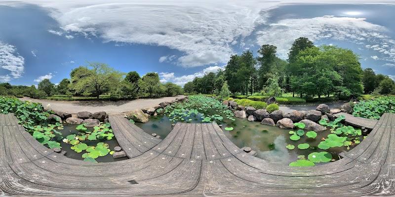 天平の丘公園 大賀蓮池