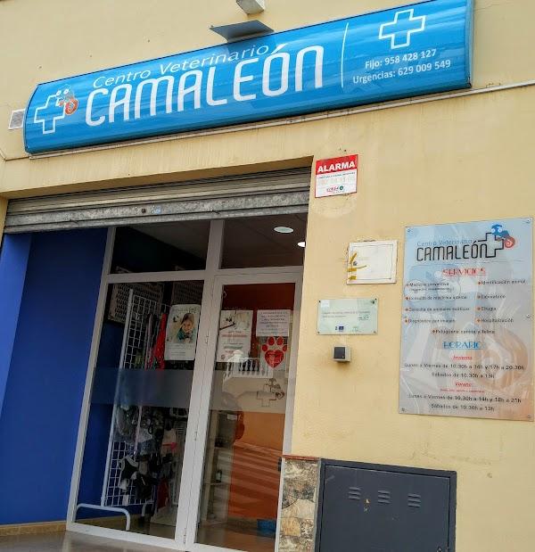 Centro Veterinario Alfacamaleón