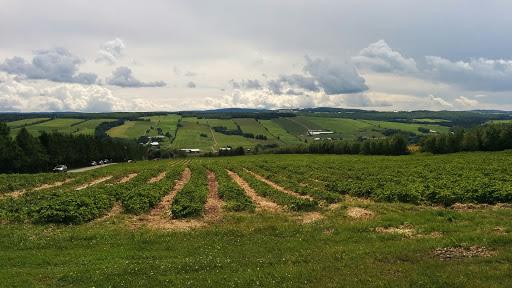 Food Producer Aux fruits de la colline in 1720 Route du Président Kennedy S () | CanaGuide