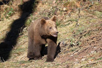 Alternative Wolf and Bear Park Black Forest