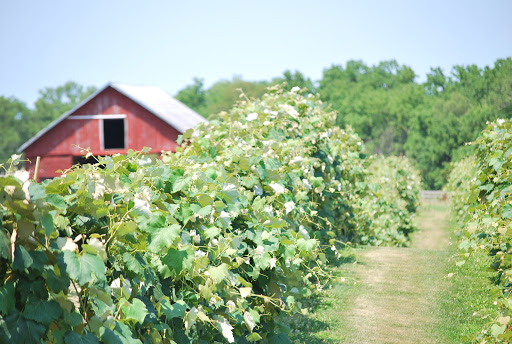 Vineyard «Ardon Creek Vineyard and Winery», reviews and photos, 2391 Independence Ave, Letts, IA 52754, USA
