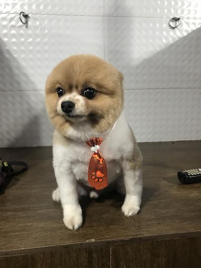Pet Shop Filé Miau
