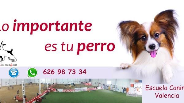 Bicho Peludo. Adiestramiento Canino. Educación de Cachorros. Adiestradores Valencia. Escuela Canina