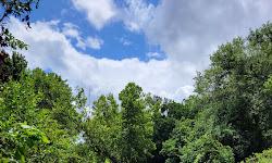 Brushy Creek Trail East