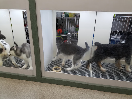 Pet Store «Petland Pensacola», reviews and photos, 6235 N