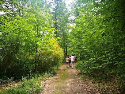 Hervas bosque castañas
