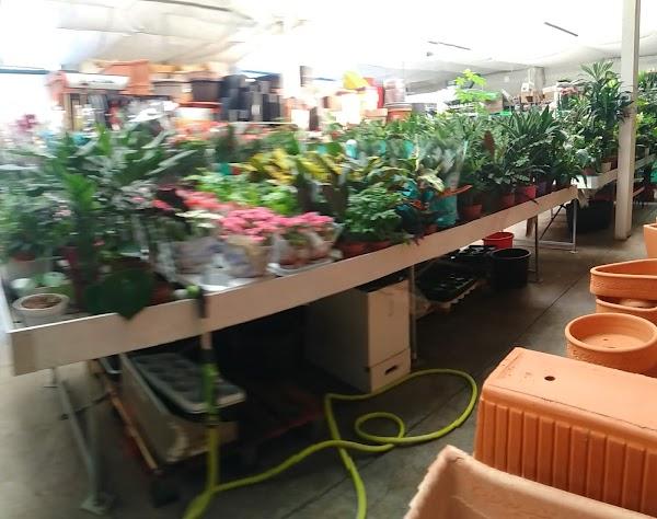 1000 y Pico Plantas