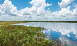 Buck Lake Conservation Area