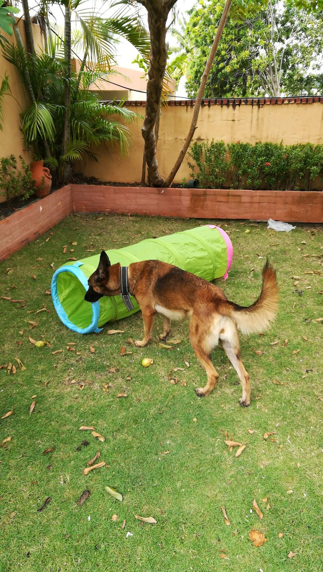 Capone Dog Training