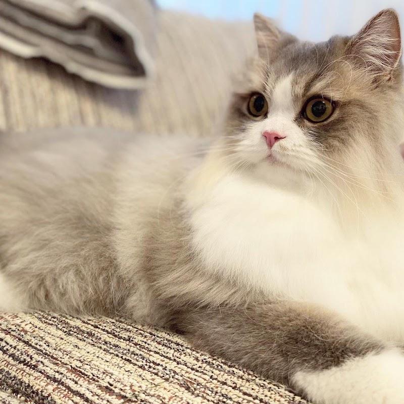 猫専門サロン&ホテル トム&ベル