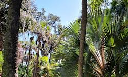 Joy & Gordon Patterson Botanical Garden