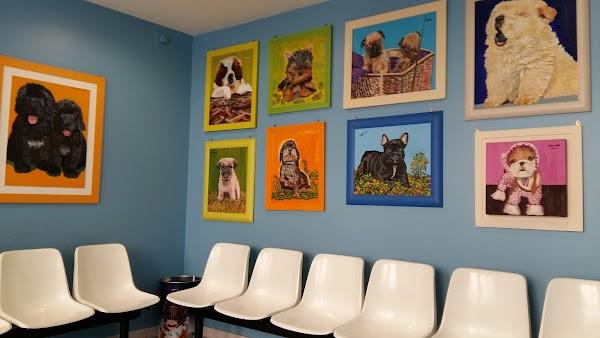 Centro Clínico Veterinario San Ignacio