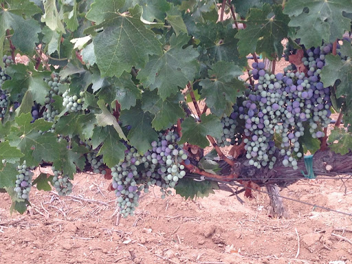 Winery «Reyes Winery», reviews and photos, 10262 Sierra Hwy, Agua Dulce, CA 91390, USA