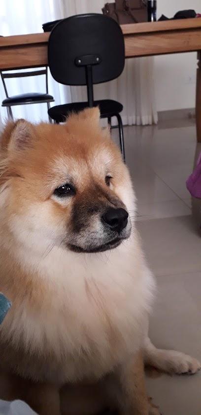 Point Animal Pet Shop - Banho e Tosa