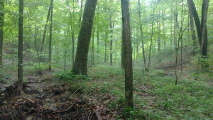 Scarlet Oak Woods