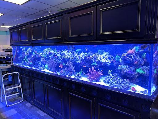 Tropical Fish Store «Vivid Aquarium Inc», reviews and photos, 21126 Vanowen St, Canoga Park, CA 91303, USA