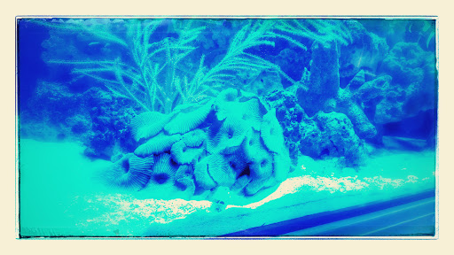 Tropical Fish Store «Classic City Aquariums», reviews and photos, 1260 Mars Hill Rd, Watkinsville, GA 30677, USA