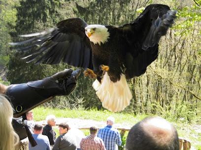 Greifvogelpark Saarburg