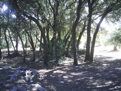 Bañizuela Forest