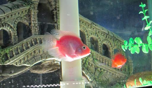 Pet Store «World Wide Aquarium & Pets», reviews and photos, 7043 Ridge Ave, Philadelphia, PA 19128, USA
