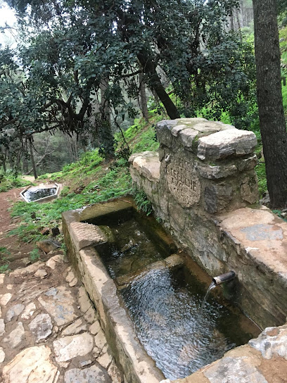 Sendero Fuente Del Acebuche