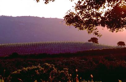 Mount Eden Vineyards