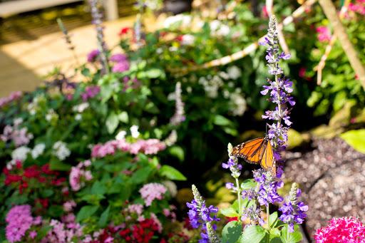 Plant Nursery «Lukas Nursery & Butterfly Encounter», reviews and photos, 1909 Slavia Rd, Oviedo, FL 32765, USA