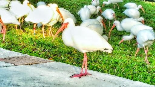 Private Golf Course «Seminole Golf Club», reviews and photos, 901 Seminole Blvd, Juno Beach, FL 33408, USA