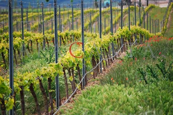 Alacarta Wine Tours  Vino y gastronomía