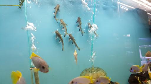 Tropical Fish Store «Aquariums By JJ», reviews and photos, 33 Hamburg Turnpike, Riverdale, NJ 07457, USA
