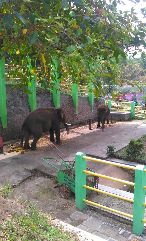 Tempat Wisata Di Wonogiri Taman Satwa Gajah Mungkur