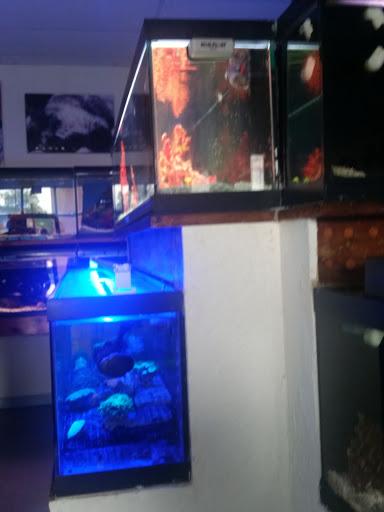 Aquarium Shop «Reef Encounter-Bergen County», reviews and photos, 504 Hudson St, Hackensack, NJ 07601, USA