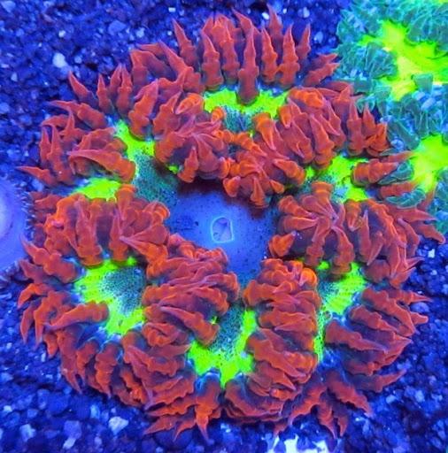 Aquarium «Aquarium Creations», reviews and photos, 2724 NW 30th Ave, Lauderdale Lakes, FL 33311, USA
