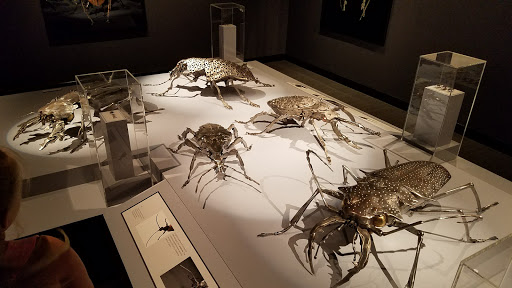 Natural History Museum «Yale Peabody Museum of Natural History», reviews and photos, 170 Whitney Ave, New Haven, CT 06511, USA
