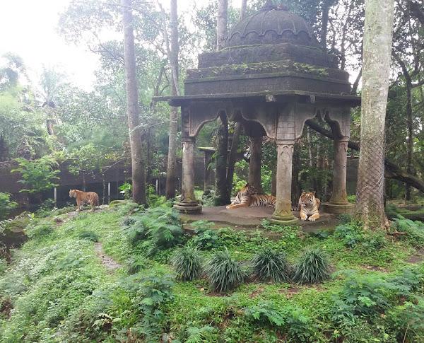 Indonesia Safari Park II Prigen