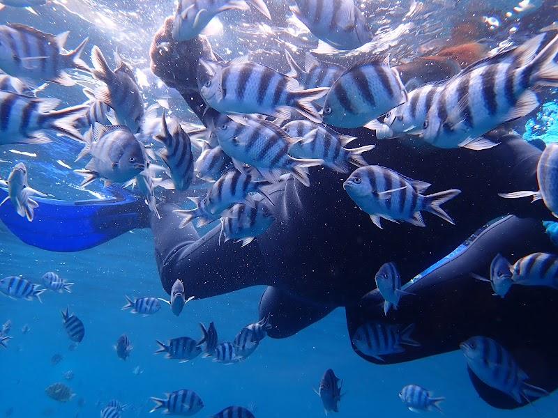 沖縄青の洞窟 専門店| ダイビング|シュノーケリング【ナチュラルブルー本店】